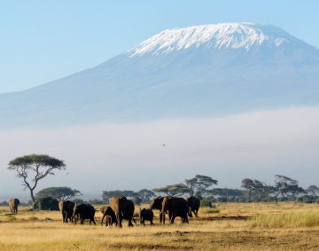 Conquering Mt Kilimanjaro for cancer research