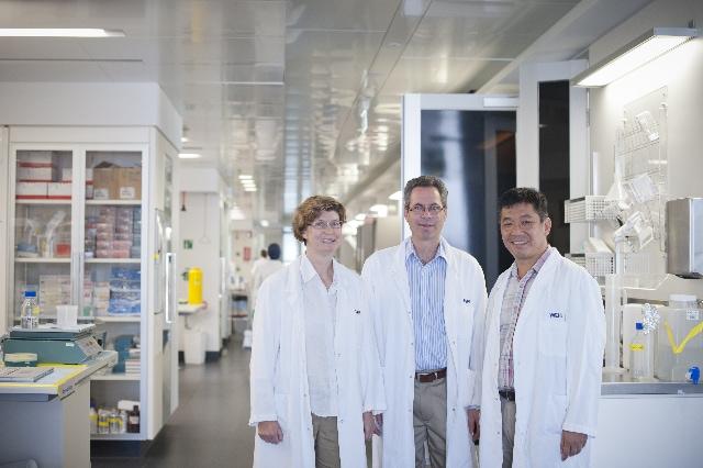 WEHI image Profs Visvader, Lindeman, and Huang
