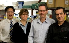 ACRF contributes to breast cancer breakthrough