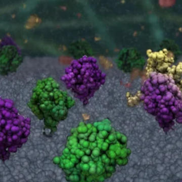 Stopping healthy cells from self-destructing